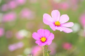 flower blooming the blooming flower levekunst art of life