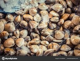 cuisiner des palourdes fraiches palourdes fraîches à vendre sur le marché fond de fruits de mer