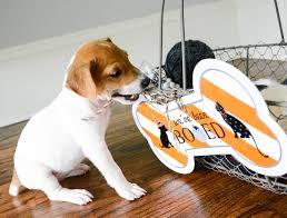 ruff draft free boo sign puppies u0026 kittens anders ruff custom