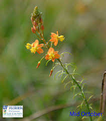 florida native plant list colorful plant beds for south florida and similar climates