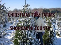 Washington Christmas Tree Farms - cheryl u0027s christmas trees 1901 7th st marysville washington