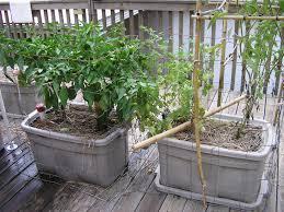 front yard vegetable gardening survival sherpa