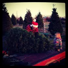 pine grove christmas tree farm home facebook