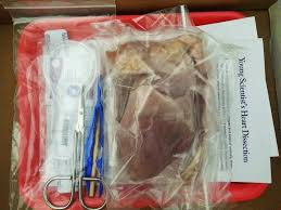 dissection let u0027s take a look inside the heart u2013 the scientific mom