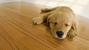 best hardwood floor shine the floor