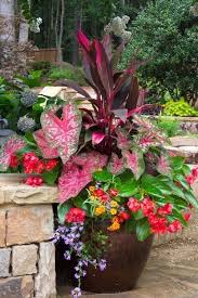 Plant Combination Ideas For Container Gardens 758 Best Container Gardening Ideas Images On Pinterest