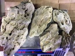 Aquascaping Rocks Aquascaping Rocks Ada 10lbs Ohko Dragon Stone Plants Fish Shrimp