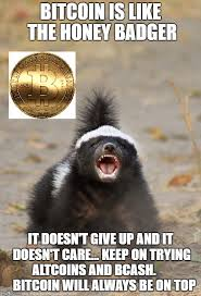 Meme Honey Badger - bitcoin is like the honey badger meme steemit