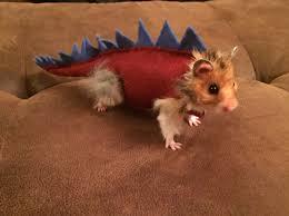 dino halloween costume hamster dinosaur halloween costume steven pinterest dinosaur
