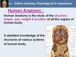 Anatomy And Physiology Human Body Chapter 8 Fundamentals Of Anatomy And Physiology