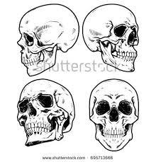 skull vector illustration collection stock vector 2018