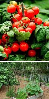 238 best urban city vegetable gardening images on pinterest