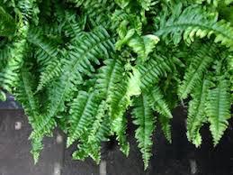 plant species guide for wallgarden vertical gardens