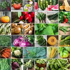 vegetable seeds grow tomatoes peppers broccoli u0026 garden