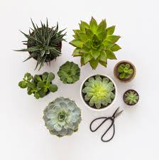 8 tips for taking care of succulents