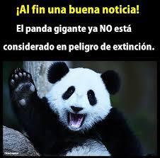 top memes de panda en español memedroid