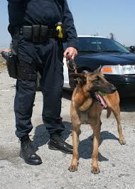 belgian malinois police jobs in cars police k9 unit rod network