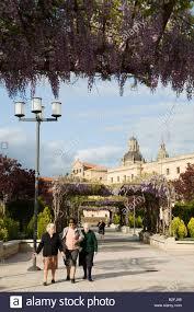 spain salamanca older ladies walk beneath flowering wisteria vines