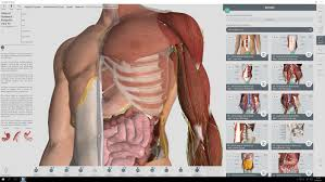 Male Body Anatomy Organs The Best 3d Anatomy Software To Use For Human Body Research