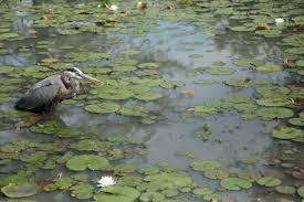 birds kenilworth park u0026 aquatic gardens u s national park service