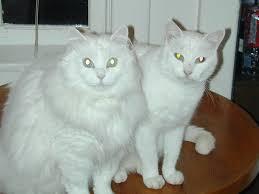 aptenobytes cat blogging