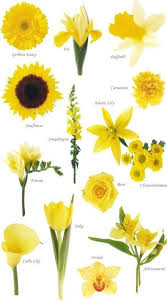best 25 jonquil wedding bouquet ideas on pinterest jonquil