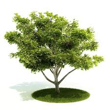 leaves small green tree 3d model cgtrader