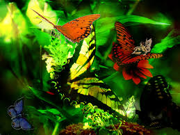 wallpapers fairies with butterflies shinning butterfly fairy