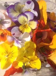 organic edible flowers organic edible flowers australian organic