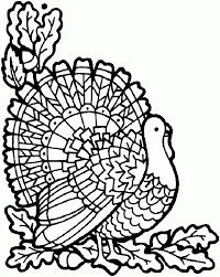 pilgrims turkeys veggies oh my