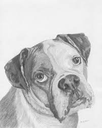 boxer dog drawings page 3 of 5 fine art america