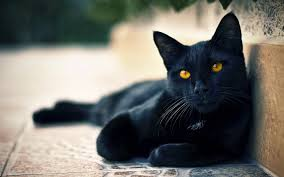 halloween background cat eyes 600x 600 black cat superstitions the good the bad and the mostly
