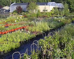 vegetable plants organic vegetables bangor pennsylvania pa
