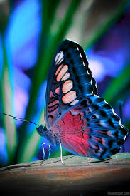colorful butterfly pictures photos and images for