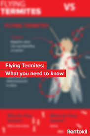 the 25 best flying termites ideas on pinterest do termites fly