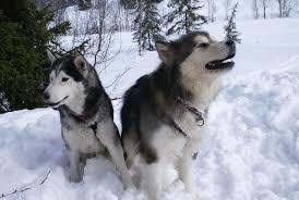 Petmate Indigo Dog House Xl Best Igloo Dog House For Husky Dog N Treats
