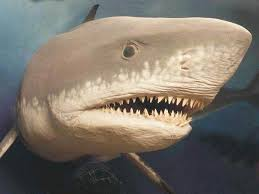 biggest megalodon shark extinct megalodon the largest shark ever may have grown too big