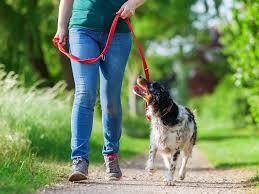 urban dog ring holder images Poovault is a lightweight smelly dog poop bag holder poo vault jpg