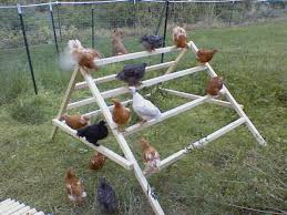chicken jungle gym backyard chickens