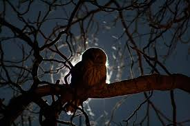 michaelpocketlist itap of an owl in a tree in the middle of the