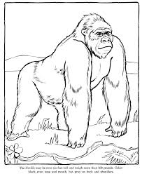 zoo coloring pages cool ideas 1799 unknown