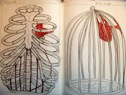 rib cage drawing at getdrawings com free for personal use rib cage