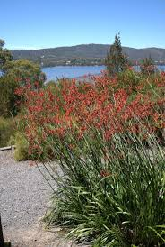 428 best australian native gardens etc images on pinterest