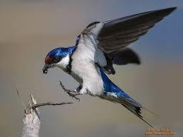 top 25 wild bird photographs of the week 49