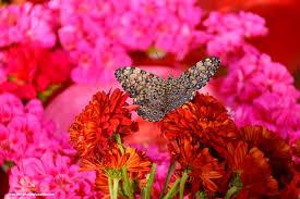 butterfly garden dubai world love flowers