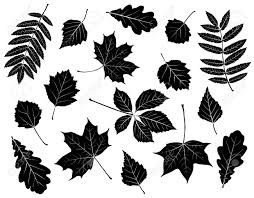 birch cutout stock photos royalty free birch cutout images and