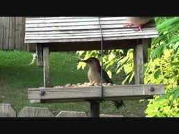 Nc Backyard Birds Backyard Bird Watching In New Bern Nc Youtube