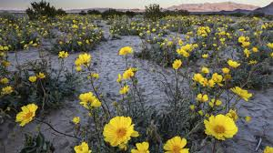 desert native plants plant conservation alliance