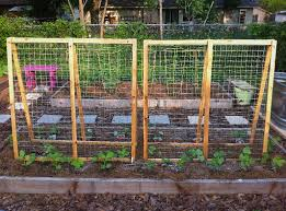 Can Cucumbers Grow Up A Trellis Summer Squash Trellis The Trellises Turned Out So Lovely Pole