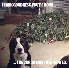 Funny Holiday Memes - friday frivolity holiday cheer one way or another christmas